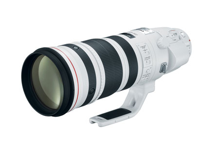 EF 200-400mm f/4L IS USM Extender 1.4X  | Super Telefoto view 2